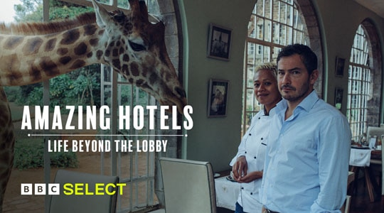 giraffe sticks head through hotel window