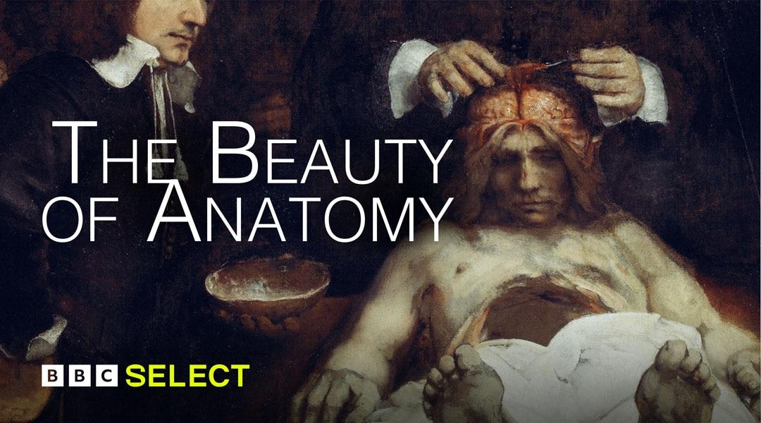 The Beauty of Anatomy